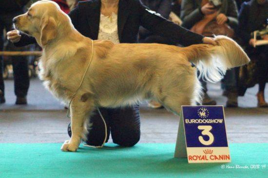 Givanni Eurodogshow